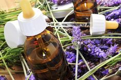 """Lavender is a """"must-have"""" essential oil for most people. In fact, Lavender has been used to help ailments for over 2,500 yrs. It was used by several civilizations, including the Egyptians, Greeks, and Romans. Find out more about the history of lavender here!"""