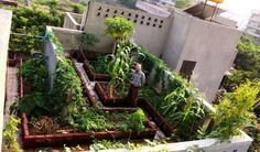 http://www.unquadratodigiardino.it/forum-di-giardinaggio/verdure-piante-da-orto-piccoli-frutti-arbusti-da-frutta-e-alberi-da-frutto/25704-piccolo-orto-da-dove-cominciare.html