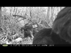 STEALING BIGFOOT CAPTURED ON GAME CAM