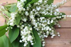Flores, Konwalie, Lirios Blancos Del Valle, Naturaleza