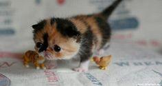Cutest kitten I've ever seen.
