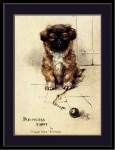 English-Picture-Print-Pekingese-Puppy-Dog-Puppies-Dogs-Poster-Art