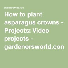 How to plant asparagus crowns - Projects: Video projects - gardenersworld.com