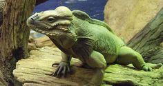 Reptile Awareness Day 21.10.