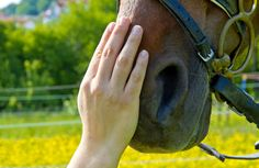 Animal Healing is wonderful for horses