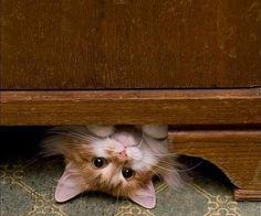 (Via Chats citations et des images mignonnes de chat | discuter Photos et vidéos)