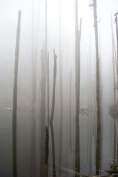 mirror forest, at Nantou,Taiwan #forest