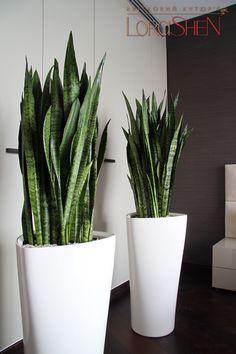 plants — Lorashen