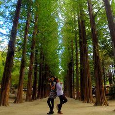 Nami Island // South Korea // Gapyeong // Seoul // Autumn // Winter Sonata // Travel // Wanderlust Nami Island, Fall Winter, Autumn, Wanderlust Travel, South Korea, Seoul, Corner, Plants, Fall