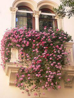 Padua - Balcony in Corte Arco Valaresso- Padova – Balconcino in Corte Arco Valaresso Padua – Small balcony in Corte Arco Valaresso Balcony Design, Garden Design, Balcony Ideas, Beautiful Gardens, Beautiful Flowers, Beautiful Places, Balcony Flowers, Garden Windows, Climbing Roses