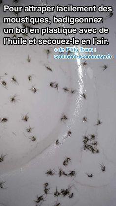 Des moustiques volent tranquillement au-dessus de vous ? Et vous ne s'avez pas comment les attraper ? Heureusement, il existe un piège naturel pour vous en débarrasser. Découvrez l'astuce ici : http://www.comment-economiser.fr/attraper-moustiques-maison.html?utm_content=bufferaa899&utm_medium=social&utm_source=pinterest.com&utm_campaign=buffer