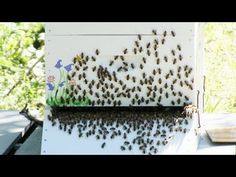 Beekeeping - Wax Moths and Cardboard Bee Box Discussion - YouTube