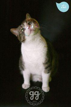 my funny cat :)