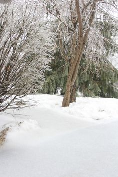 Right Where I Am: Peace From Winter Trees. Personal Reflections on a February Morning in the Garden. Winter House, Winter Garden, Peaceful Home, Nothing To Fear, Grey Skies, Water Droplets, Christmas Villages, Modern Farmhouse Decor, Winter Trees