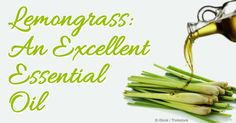 Aside from its refreshing insect-repelling scent, lemongrass oil has a wealth of health benefits and uses around the home – learn more in this article.  http://articles.mercola.com/herbal-oils/lemongrass-oil.aspx
