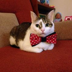 gentleman waiting for his lady - http://unusual-cats.com/gentleman-waiting-for-his-lady/