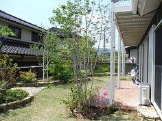 アオダモ株立 Outdoor Structures, Gardening, Lawn And Garden, Horticulture