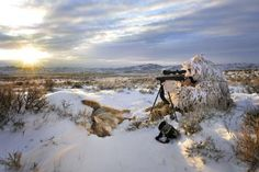 Coyote Hunting: Tactics for hunting the breeding season (in February)