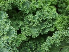 Why we love kale, and you should too! Kale is one of the most nutrient-dense foods on the planet! It is an anti-inflammatory agent It's rich with Vitamin C! Kale supports a healthy heart It's filled with antioxidants Easy Vegetables To Grow, Fruits And Vegetables, Veggies, Kale Benefits, Health Benefits, Col Kale, Freezing Kale, Raw Food Diet, Healthy Food