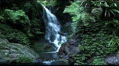 Rainforest: Beneath the Canopy Part 03