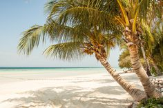 Seashore With Coconut Tree Under Blue Sky during Daytime · Free Stock Photo