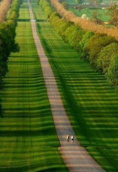 Windsor Great Park, Berkshire England