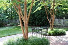 catalpa multi stemmed tree - Google Search