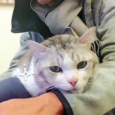 計画通り!✦(✧≖ ω ≖) 貓咪暖暖包☼