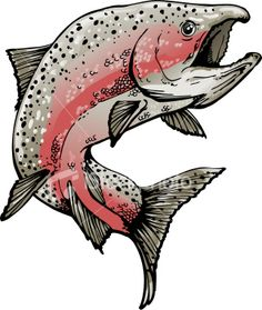 salmon illustration - Google Search