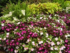 Looking forward to those summer beds of color! #summerannuals #gardens #landscapes