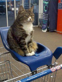 Shoppingtime