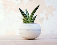 A colorful and modern porcelain mini planter. The joyful thin gray lines compliment the rounded shaped sphere and creates a young and fresh design. This
