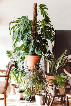 Learn everything there is to know about the Monstera. Including funny facts, all Monstera types, care tips, fixing problems and which price to pay. Monstera Deliciosa, Cool Plants, Green Plants, Sun Plants, Fake Plants, Swiss Cheese Plant, Magazine Deco, Pot Jardin, Decoration Plante