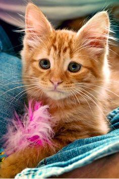 Pretty kitten.