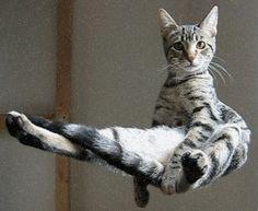 levitating-cat