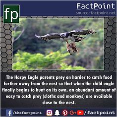 836 Likes, 2 Comments - Fact Point (@factpoint) on Instagram