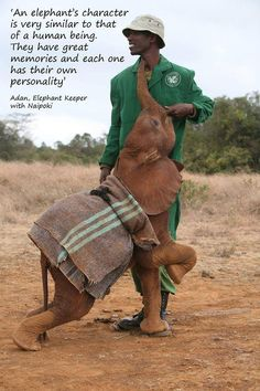 The men and women that work atThe David Sheldrick Wildlife Trust (DSWT), have such extraordinary dedication to orphaned elephants and black rhinos! Get involved, support them by sharing this post & for those can, please donate or adopt a baby elephant..