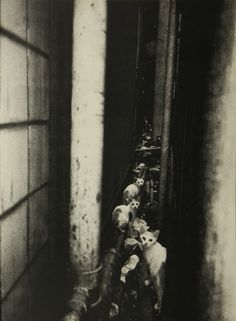 shashasha-asia:  Title: 新宿 Shinjuku  Artist: 森山大道 Daido Moriyama © 2002 Published by 有限会社月曜社