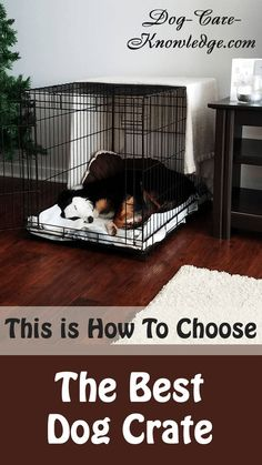 Dog Training Here's how to choose the best dog crate that will work for your purpose i. house training, travel, etc. - The best dog crate for your dog is the one that works best for you. See here for the different types of crates and why. Training Your Puppy, Dog Training Tips, Crate Training, Comfy Dog Bed, Puppy House, Aggressive Dog, Dog Costumes, Halloween Costumes, Dog Crate