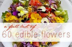 Learn how to use 60 edible flowers for natural health and wellness, Looking for an edible flowers list to add something new, exciting, colorful, flavorful and even healthy for your meal? While picking your veggies, your pick some flowers too! For ages cooks have used flowers in cooking, mostly as a garnish or decoration. But in recent years, more folks are discovering the appeal of the colors and flavors of flowers, and are using them as ingredients. In this article we hope to........