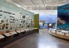 nature museum exhibition panels - Google Search