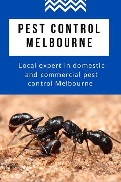 Squeak Pest Control in a thorough, competent, and environmentally friendly manner. We offer the best solutions to remove all the pests. You can use our tracking service after our team has resolved. #pestcontrol #pestcontrolservice #pest #termitecontrol #pestmanagement #Melbourne Termite Control, Remove All, Pest Management, Pest Control Services, Melbourne