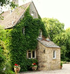 Climbing vines taking over cottage in Cotswolds!