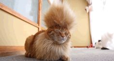 【動画】汚物は消毒にゃー!日本発、モヒカンスタイルのネコの動画が話題に : アルファルファモザイク