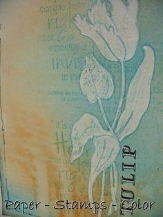 Magenta: Tulips from Amsterdam.... / Tulipes d'Amsterdam...