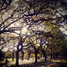 Enjoying the journey #spring #trees #green #grass #vert #leaves #sunset #beauty #nature #GoGreen #road #Belgrano #BuenosAires #Argentina (en Figueroa Alcorta Y Monroe)