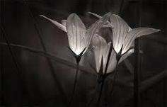 Beautiful nature photography - Google Search