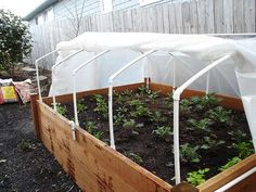 I've got an indoor greenhouse/seed starter made from PVC pipe and plastic sheeting.  I can take the same idea outside!