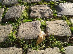Stone tiles, Gödöllő