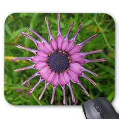 An unusual Daisy that I found in the garden of Carrick Hill House South Australia. It makes a colorful mouse pad to cheer up any desk.